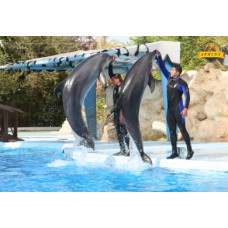Dolphin Show in sharm