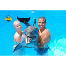 Swiming With Dolphin in sharm